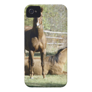 Horses in pasture iPhone 4 covers