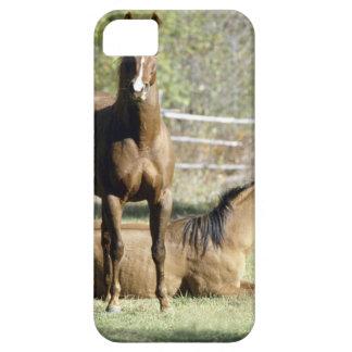 Horses in pasture iPhone 5 cases