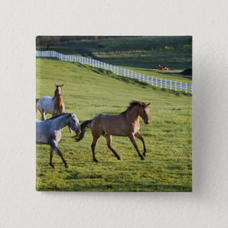Horses in pasture near Polson, Montana 2 15 Cm Square Badge