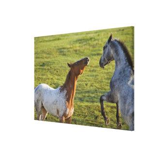 Horses in pasture near Polson, Montana Canvas Print