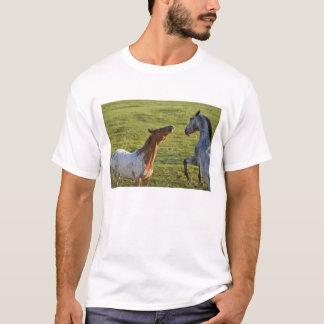 Horses in pasture near Polson, Montana T-Shirt