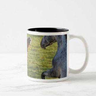 Horses in pasture near Polson, Montana Two-Tone Coffee Mug