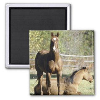 Horses in pasture square magnet
