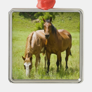 Horses in San Rafael Valley, Arizona Christmas Ornament