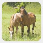 Horses in San Rafael Valley, Arizona Square Stickers