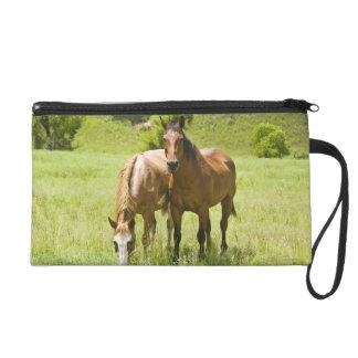 Horses in San Rafael Valley, Arizona Wristlet