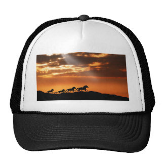 Horses in sunset cap