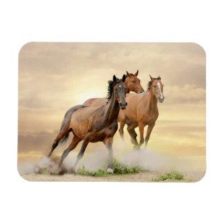 Horses In Sunset Rectangular Photo Magnet