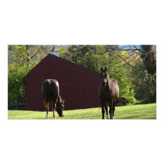 Horses in the field photo greeting card