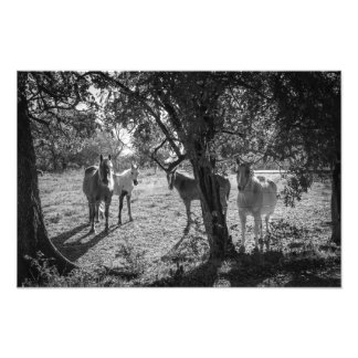 Horses in the Field Photo Print