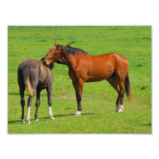 Horses in the Meadow Poster Print
