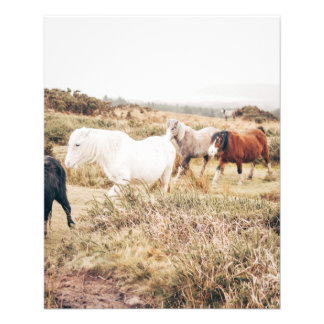 Horses in the Nature 11.5 Cm X 14 Cm Flyer