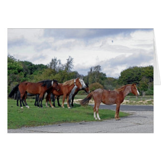 Horses in the New Forest CARD