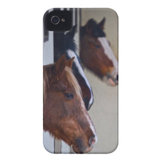 Horses in the Stables BlackBerry Bold Case