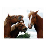 Horses laughing