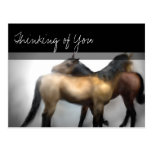 Horses Love Friendship Postcard - Thinking of You