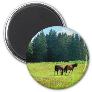 Horses Fridge Magnets