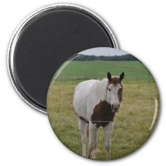 Horses Refrigerator Magnets
