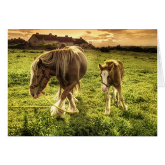 Horses Mother and Foal Card