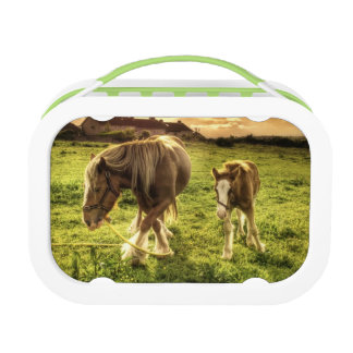 Horses Mother and Foal Lunch Box