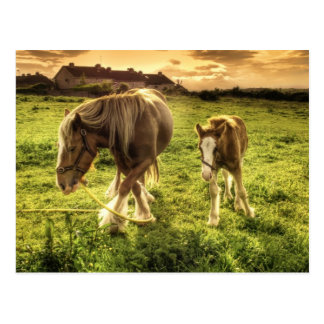 Horses Mother and Foal Postcards