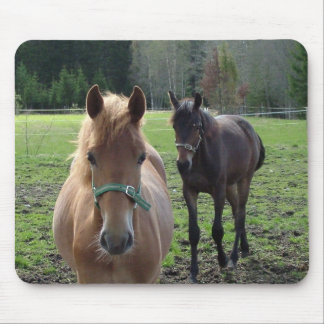 Horses mousepad