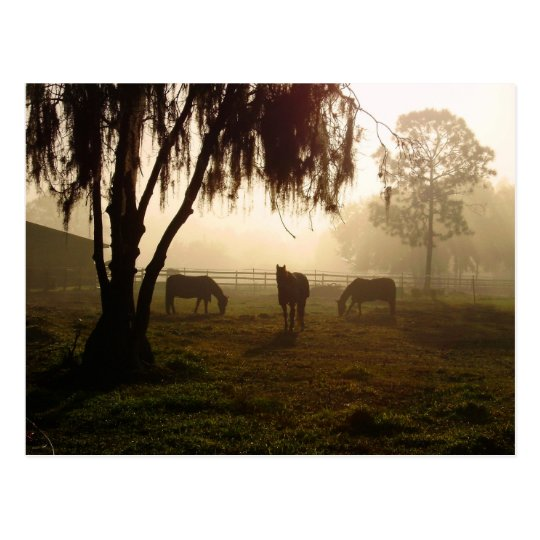 Horses on a Misty Morning Postcard