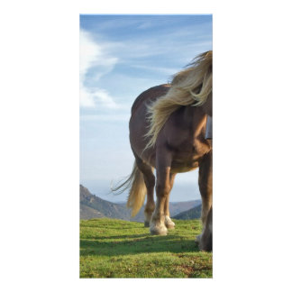 Horses on Bianditz Mountain Spain Customized Photo Card
