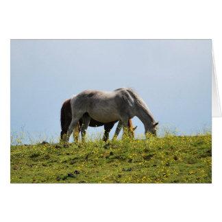 Horses on Hilltop Card