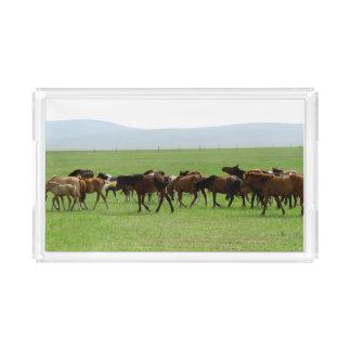 Horses on Pasture - Landscape Photograph Acrylic Tray