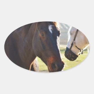 Horses Oval Sticker