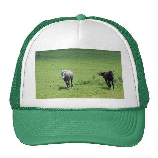 Horses, part 2 cap