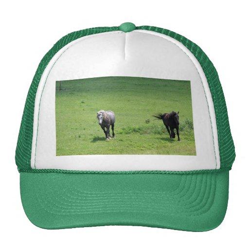 Horses, part 2 hat