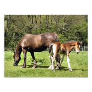 HORSES PHOTO ART