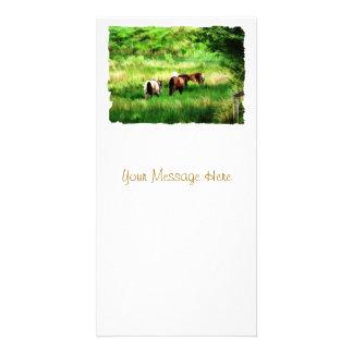 HORSES PHOTO CARDS