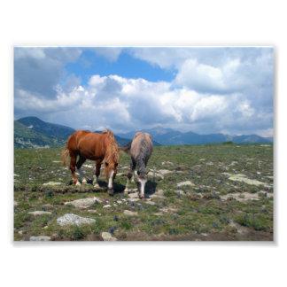 Horses Photo Print