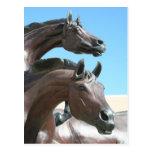 Horses Post Card