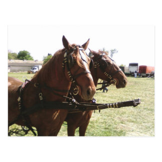 Horses Ready To Go Postcard