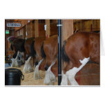 Horses rear ends card