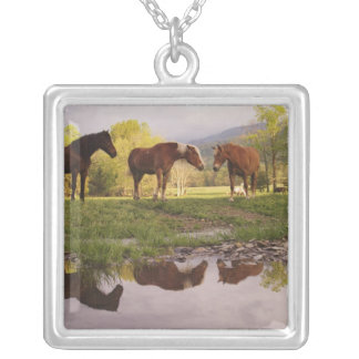Horses reflected in small stream, Cades Cove, Silver Plated Necklace
