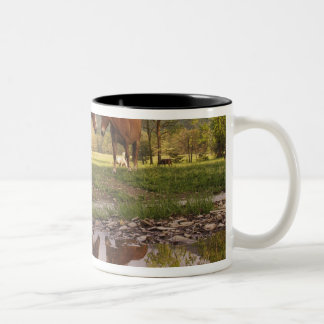 Horses reflected in small stream, Cades Cove, Two-Tone Coffee Mug
