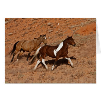 Horses roaming the Big Horn MT of Shell Wyoming. Card