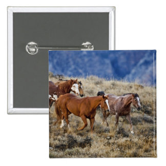 Horses roaming the scenic hills of the Big Horn 2 15 Cm Square Badge