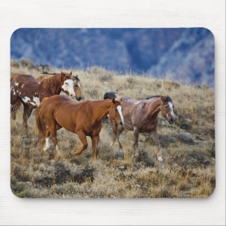Horses roaming the scenic hills of the Big Horn 2 Mouse Pad