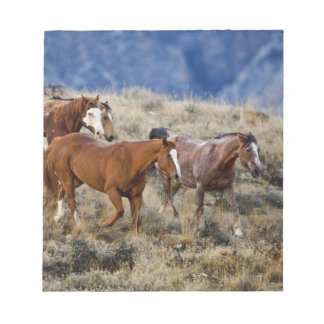 Horses roaming the scenic hills of the Big Horn 2 Notepad