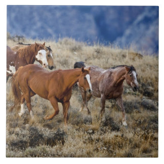Horses roaming the scenic hills of the Big Horn 2 Tile
