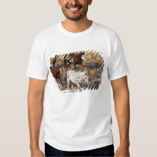 Horses roaming the scenic hills of the Big Horn T Shirts