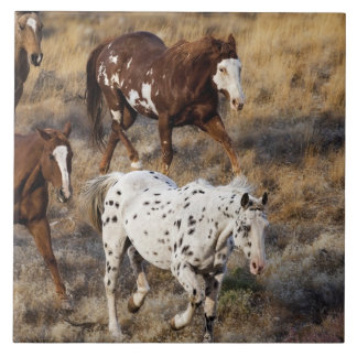 Horses roaming the scenic hills of the Big Horn Tile