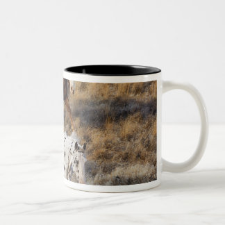 Horses roaming the scenic hills of the Big Horn Two-Tone Coffee Mug