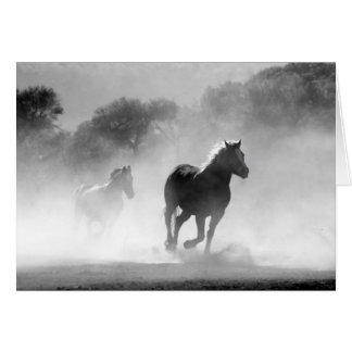 Horses running black and white beautiful scenery cards